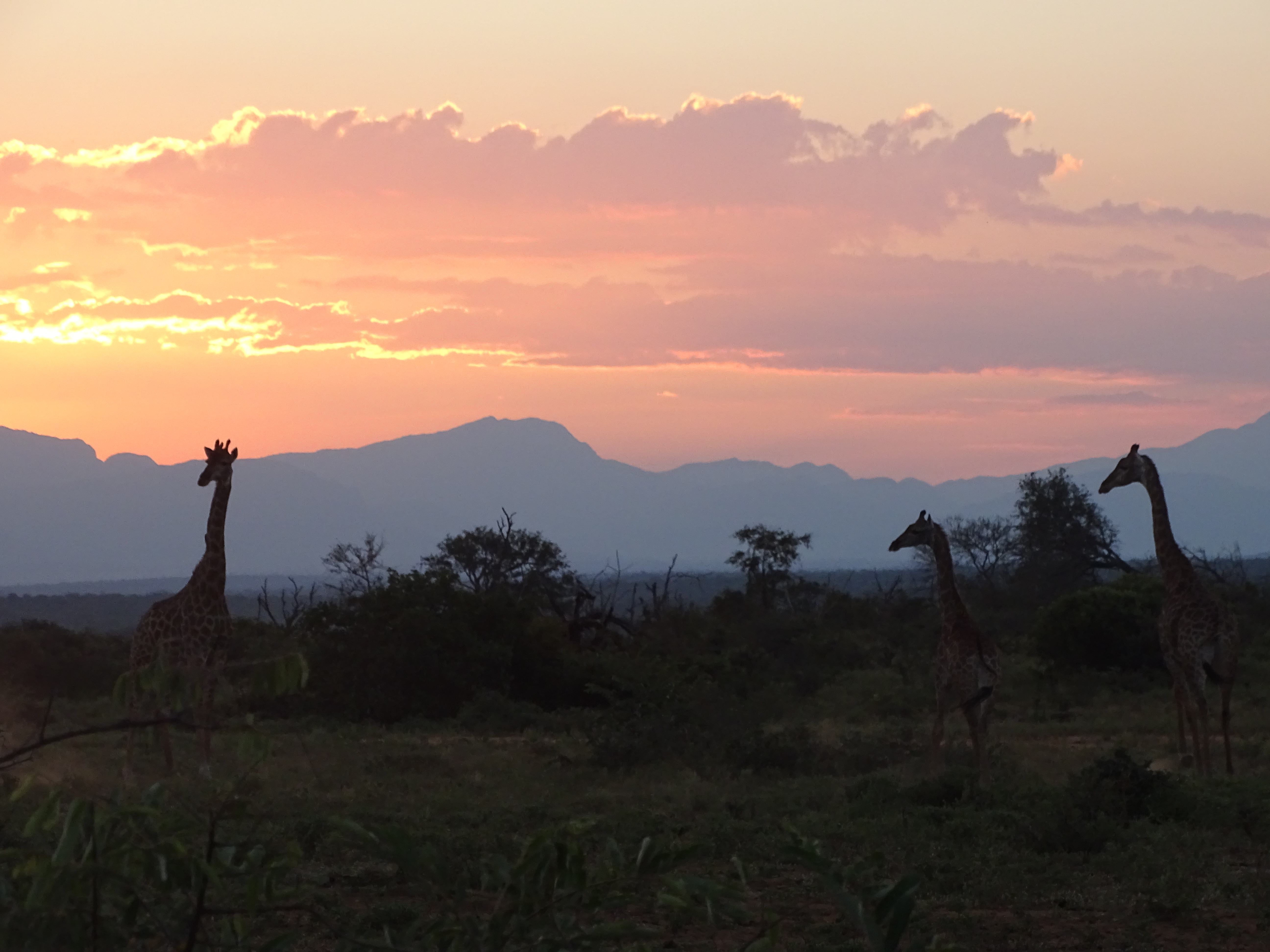Semester 3 - Week 2 - 27/03/2017 - Game Drive - Sunset And Giraffes 4