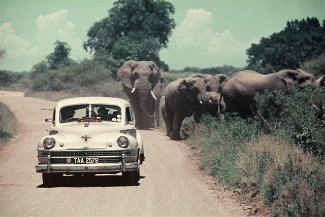 Kruger-National-Park-South-Africa3