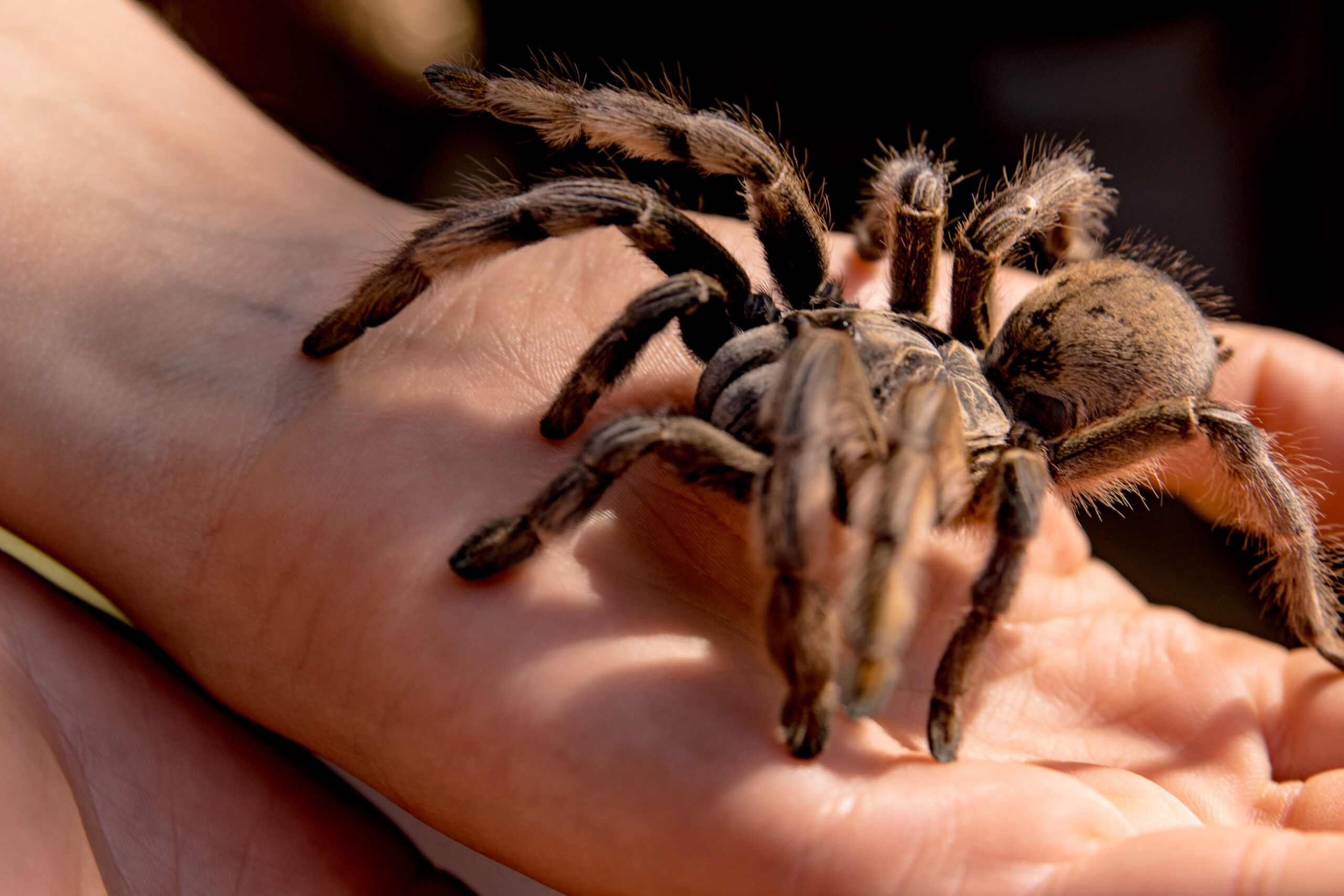 Botany, Birds and ………….Baboon spider?