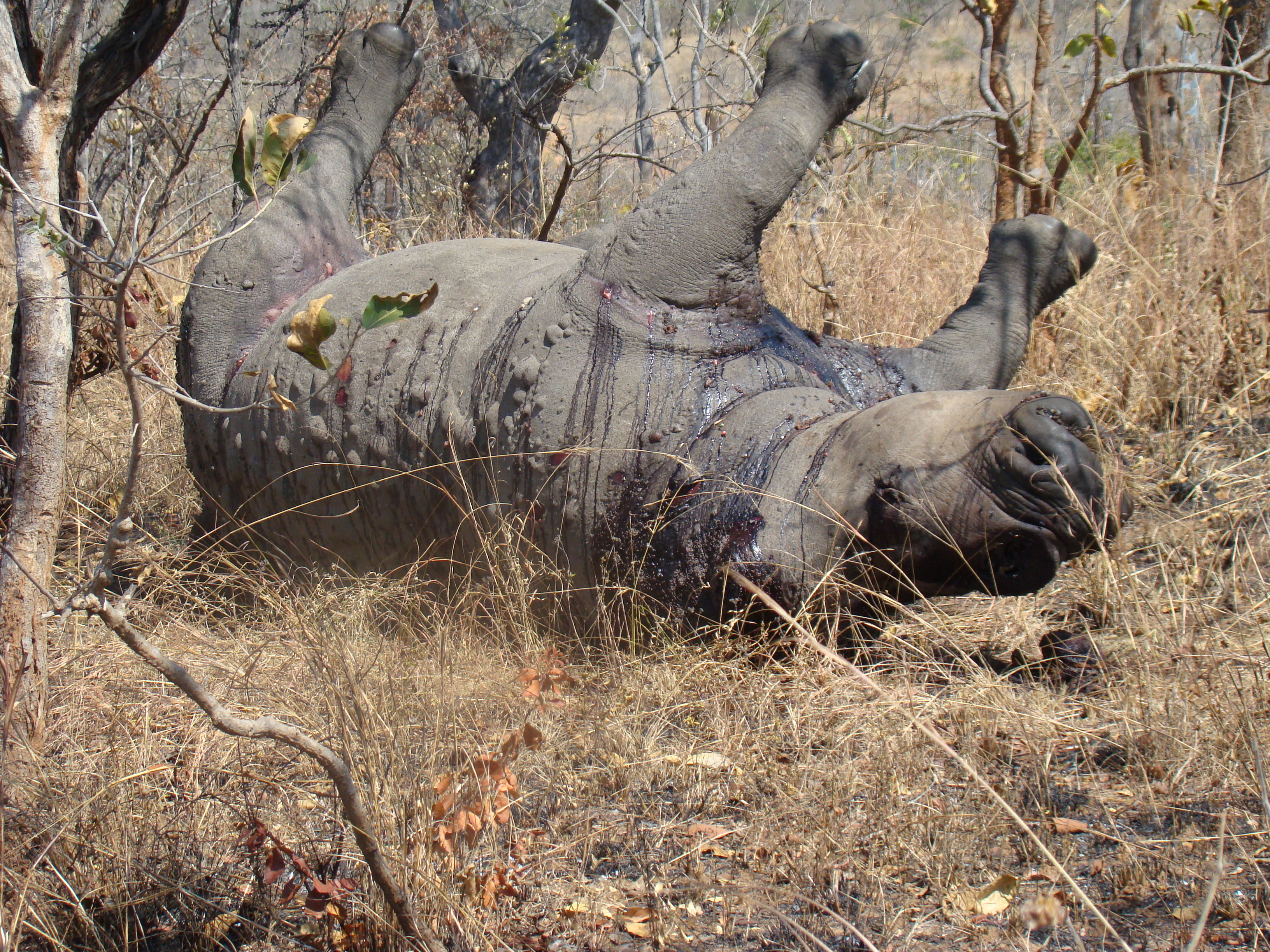 My personal experiences with the Rhino Poaching crisis