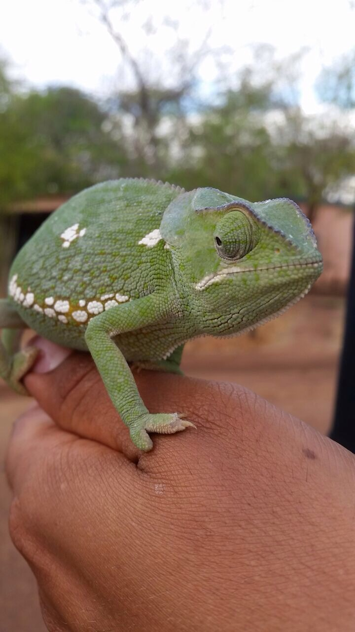 Amphibians vs Reptiles….