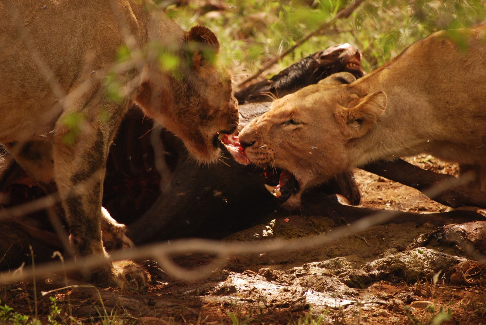 Game drives are kicked off with a BANG