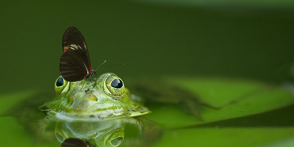 Save the Frogs Day Why you should hop on board to save the frogs