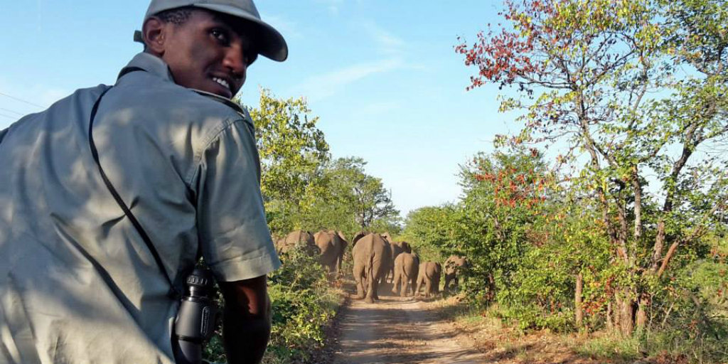 A field guide sitting on the edge of a safari vehicle on a dirt road, with a herd of elephant walking off into the distance.
