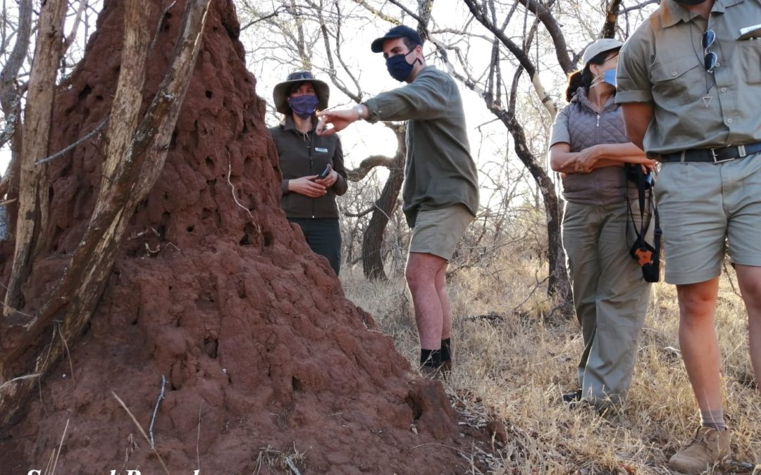 Cold-blooded reptiles and the first game drive