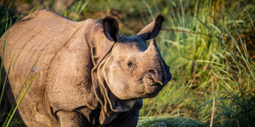 online learning prepares you to apply specific skills once you get out into the field like identifying animals like this rhino