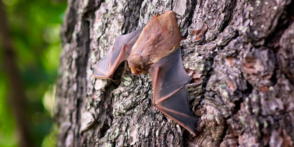 Different types of bats: how many are there?