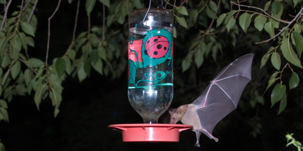 Find out how the different types of bats add to environmental conservation