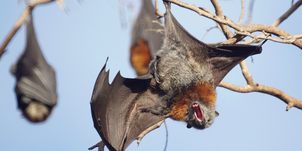 Do bats bite? Find out here