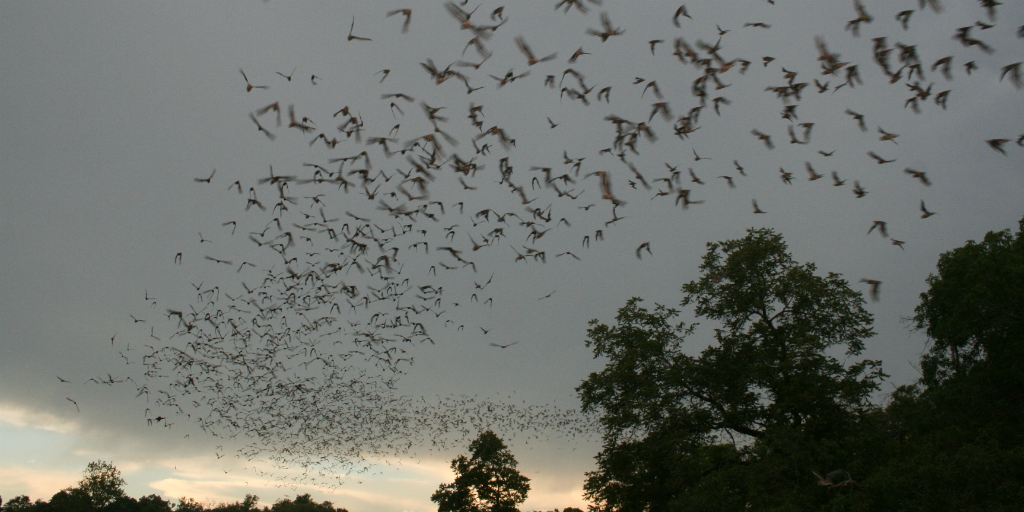 There are two categories of bats: megabats and microbats.