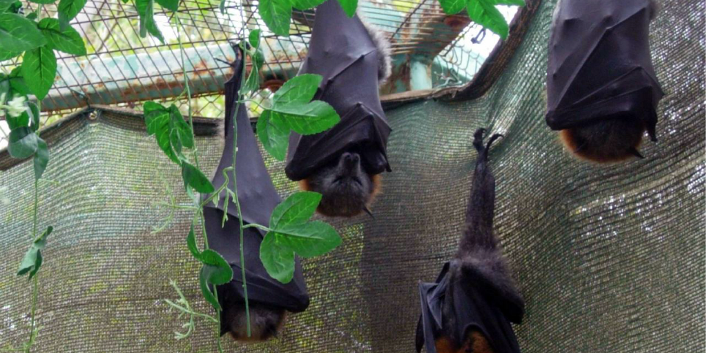 Why do bats sleep upside down? Read more to find out.