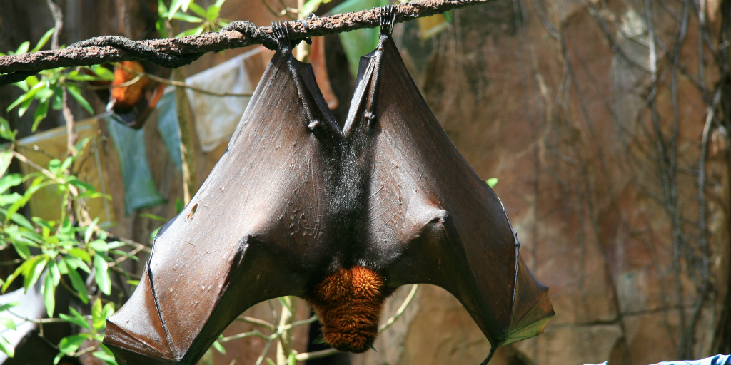 Read about the two different categories of bats