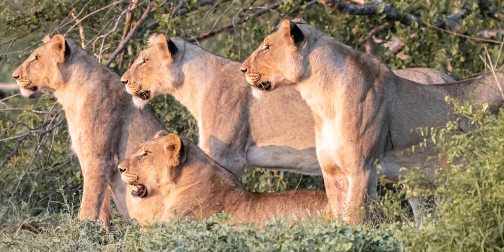 What's in a name? Southern African animal edition
