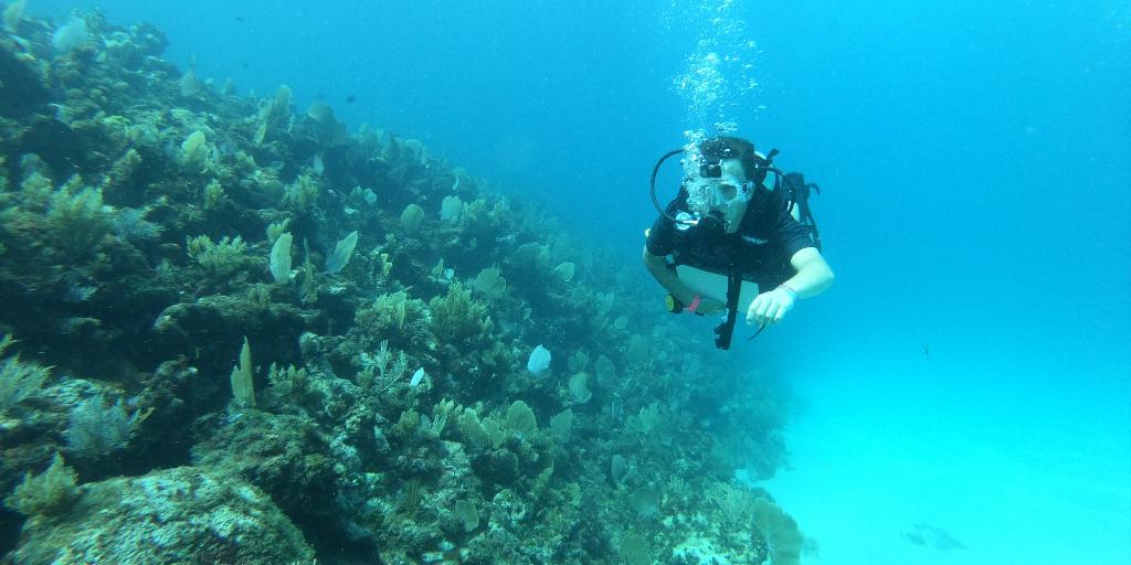 Human activity is even affecting our ocean habitats