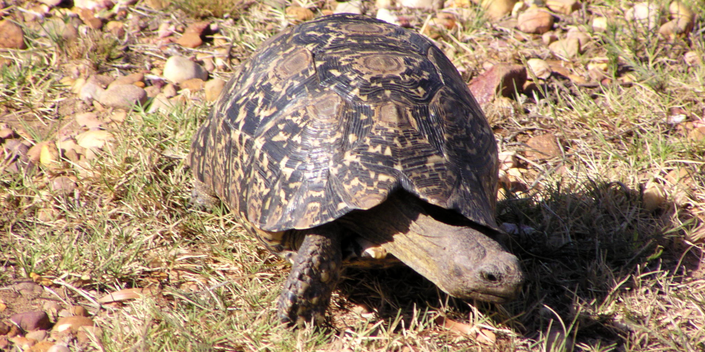 Terrific facts about the different types of tortoises