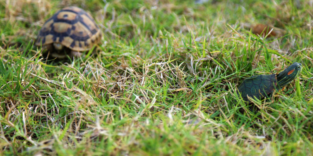 A tortoise and a turtle lay on the grass.