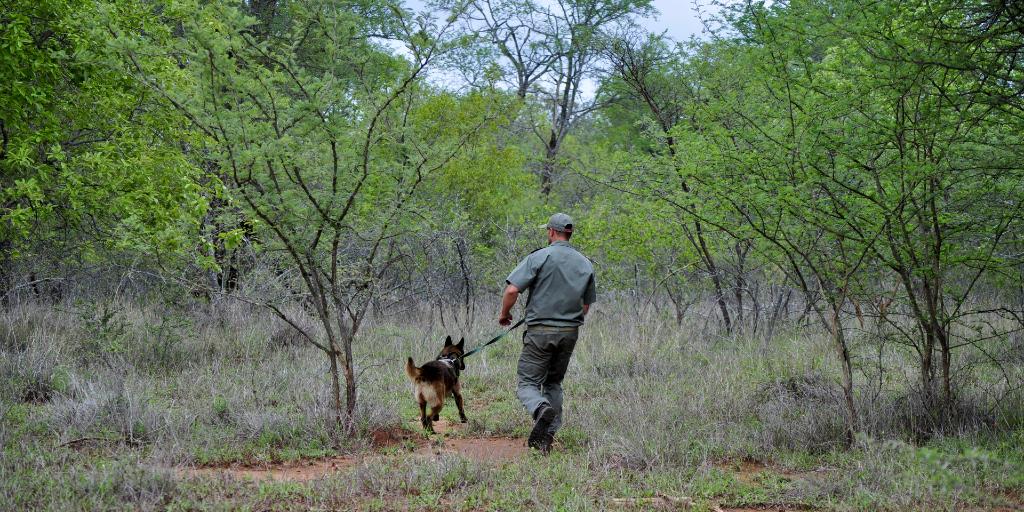 A Bushwise wildlife ranger walks around with a dog.