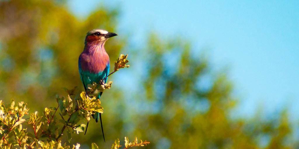 The Balule bird nerd