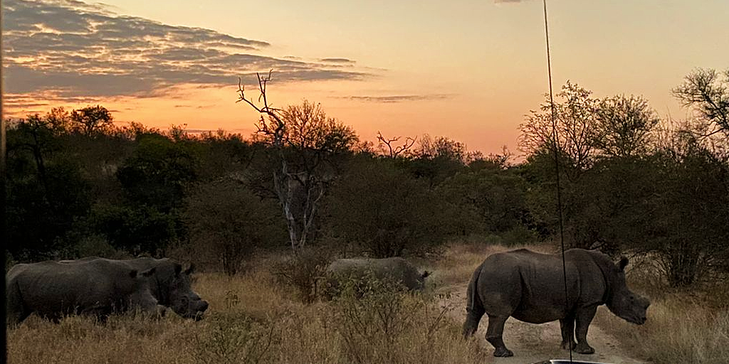 White rhinos spotted on game drive