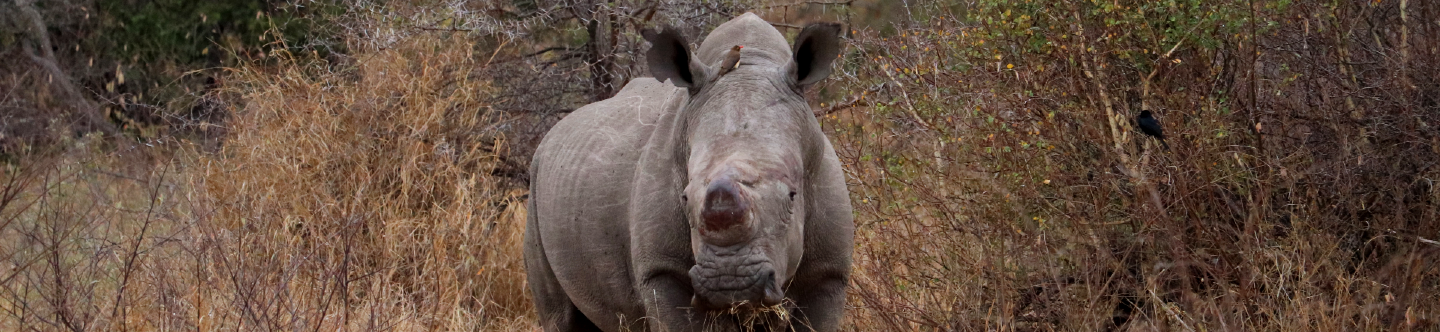 A World Rhino Day quiz: What type of rhino would you be?