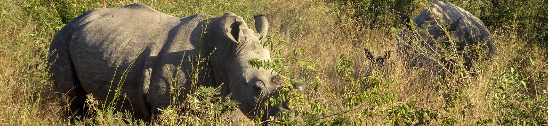 How the world celebrates World Rhino Day