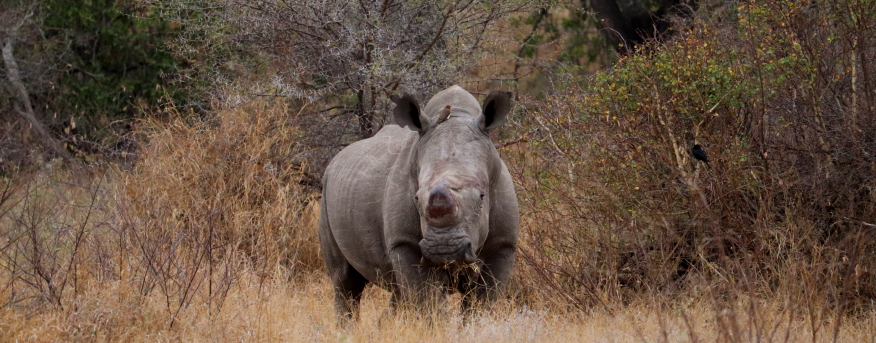 There are many ways to raise awareness about rhino conservation.