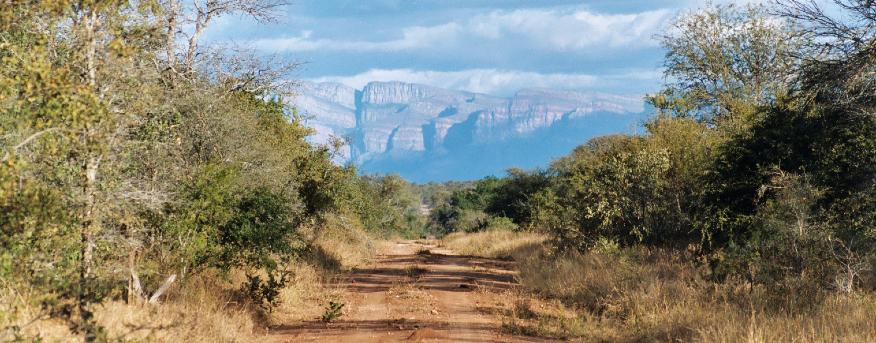 The African rhino's habitat.