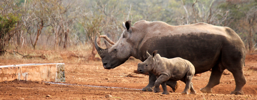 World rhino day is on the 22 September every year.