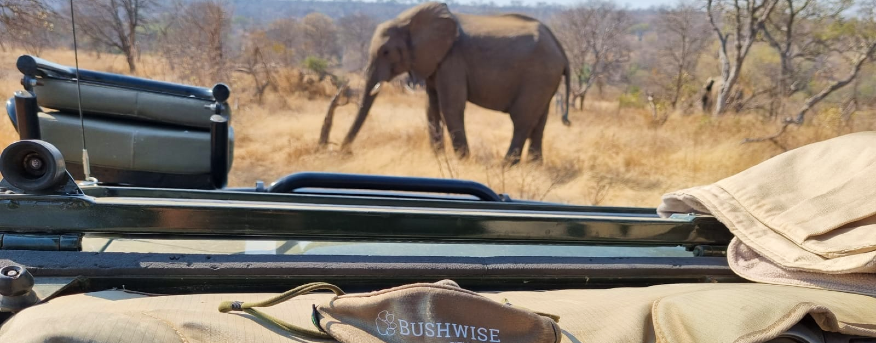 Bushwise students spot an elephant during a game drive.