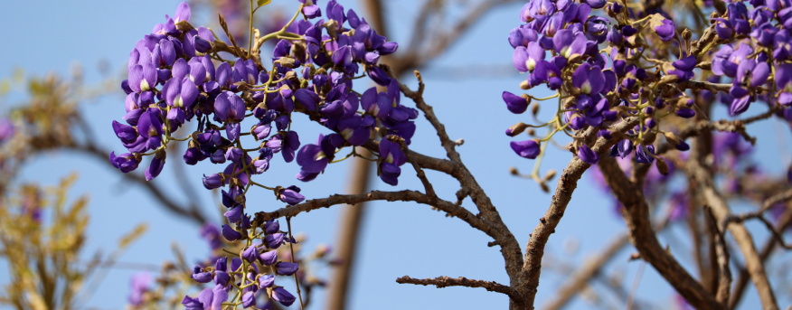 There are many different trees and plants in the Kruger.